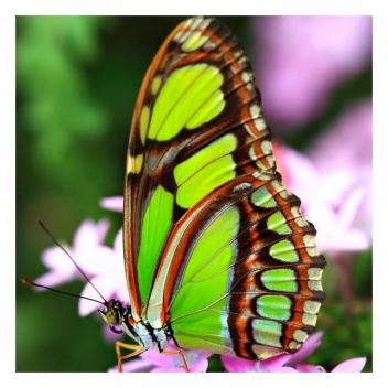 Notre ami le papillon… Aidez-nous a lui trouver un nom! 🦋 • • • Our friend the butterfly... Help us find a name for him!🦋
