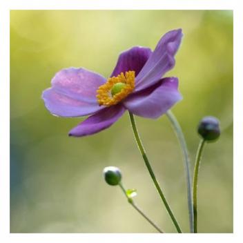 Le printemps est l'une de nos saisons préférées !💐 • • • Spring is one of our favourite seasons!💐