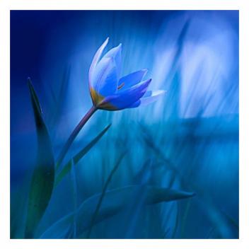 Comment ne pas se laisser envoûter par un bleu si profond…💙 • • • How not to be enchanted by such a deep blue...💙