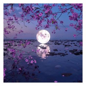Super Lune!! Elle se produit lorsque la Lune est au plus proche de son orbite, la Terre. Cette super lune d'avril sera rose et placée sous le signe du scorpion 🔮 • • • Super Moon!!! It occurs when the Moon is closest to its orbit, the Earth. This April supermoon will be pink and placed under the sign of Scorpio