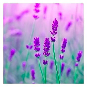 Laissez-vous transporter par le souvenir d'une douce effluves de lavande...💜 • • •  Let yourself be carried away by the memory of a sweet scent of lavender...💜