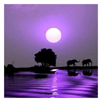 Voir la vie en violet! 💜 • • • Purple life! 💜